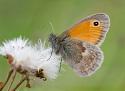 Vlinders op de Veluwe