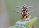 Insecten op de Veluwe